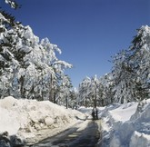 Forest full of snow in Cyprus